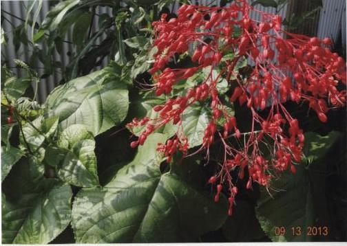 名称不明な植物